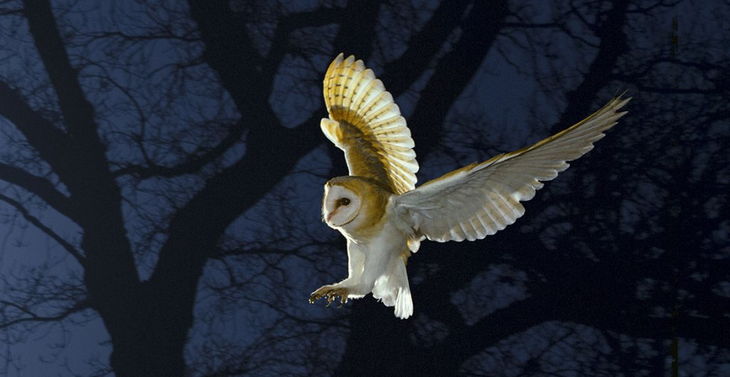 dream birthday owl